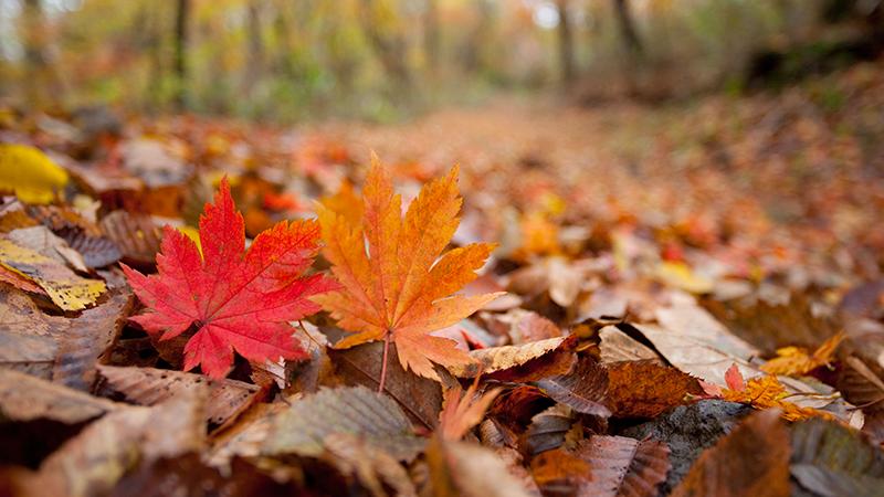 가을철-야외활동-시-주의해야-하는-발열성-질환