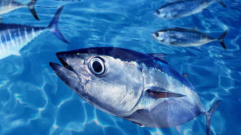 약이-되는-생선,-독이-되는-생선